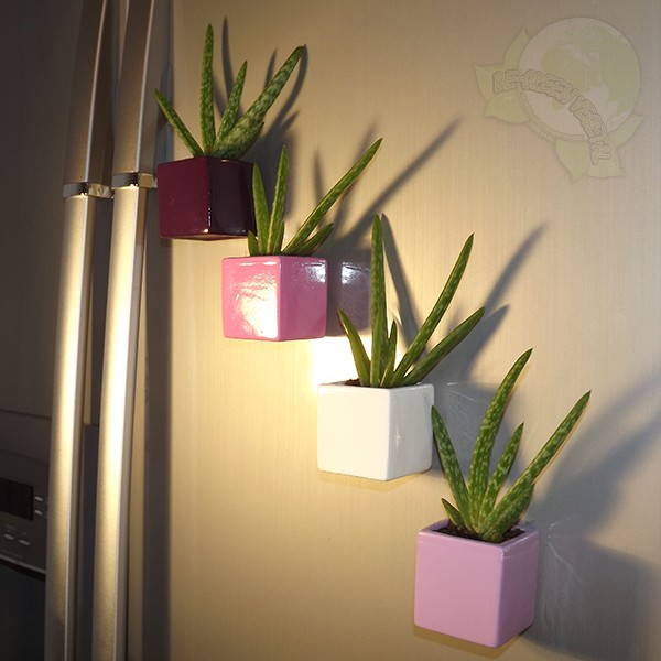 plante magnets aloe vera magn tique be green pot mauve. Black Bedroom Furniture Sets. Home Design Ideas